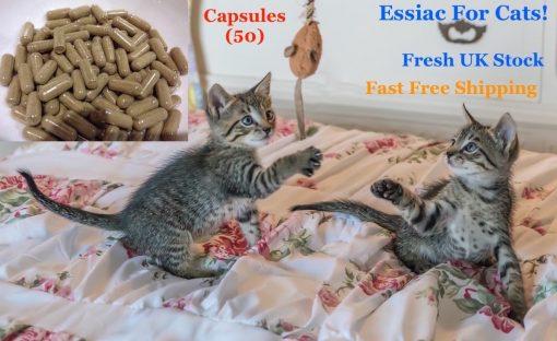 essiac for cats