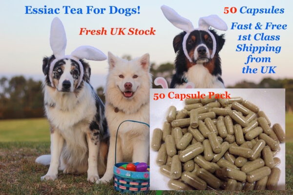 50 essiac capsules for dogs